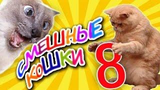 Смешные кошки 8 Приколы с животными лето 2019 - коты Funny cats vine compilation Part 8