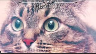 Почему коты и кошки любят валерьянку. От BRAIN TV.