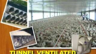 Tunnel Ventilated Bldg. Vs. Conventional Broiler Housing
