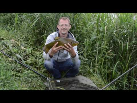 Tench fishing June 16th, Fen Drain