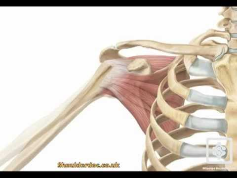 shoulder movement abduction.mov - YouTube