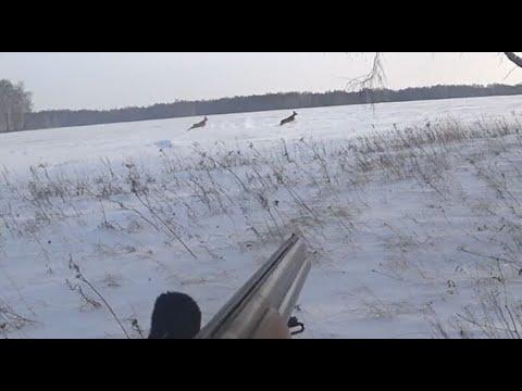 Вопрос: Как охотиться на оленя?