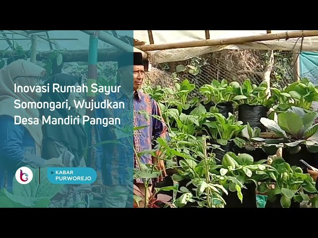 Inovasi Rumah Sayur Somongari, Wujudkan Desa Mandiri Pangan