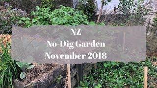 No-Dig Garden // NZ Garden // November 2018 // Small garden