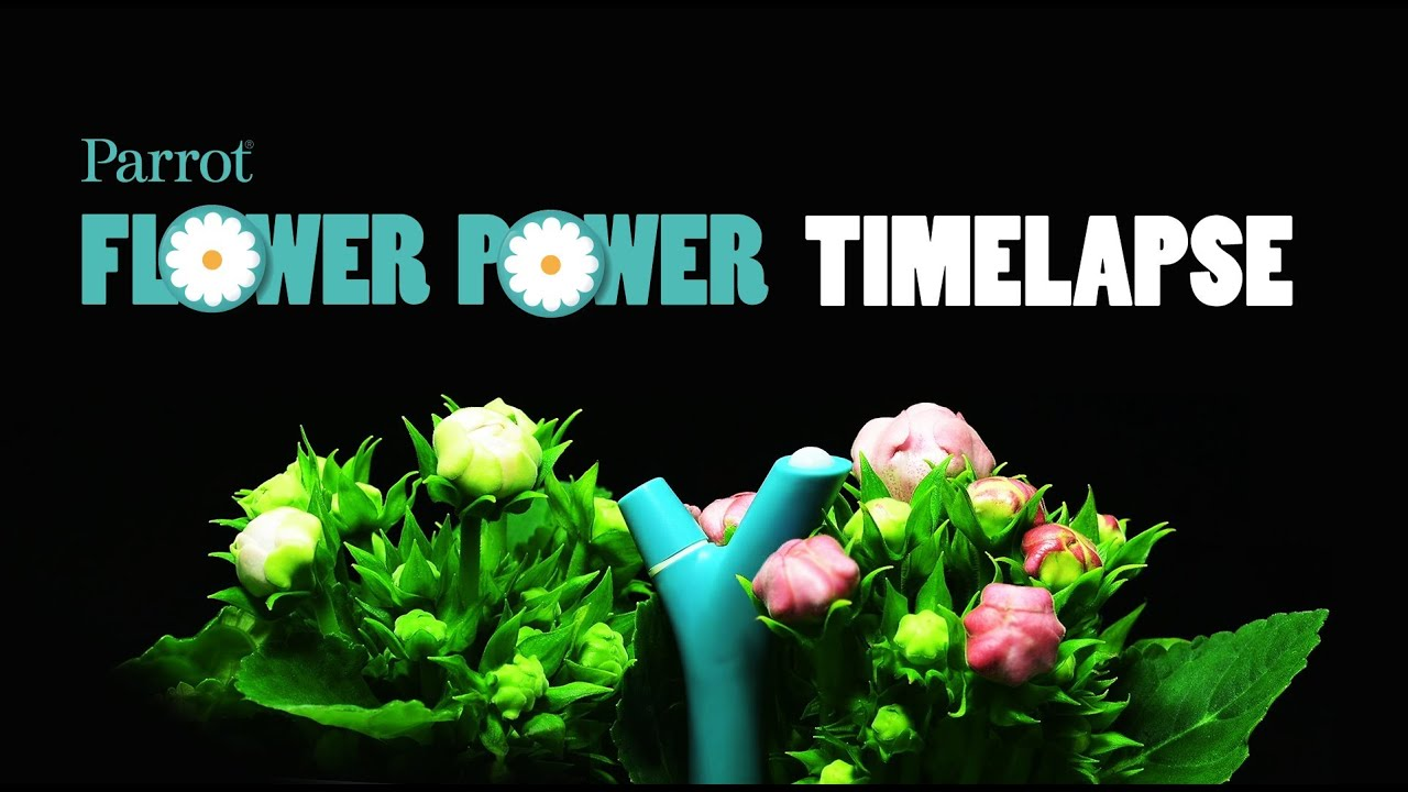 parrot flower power timelapse youtube. Black Bedroom Furniture Sets. Home Design Ideas