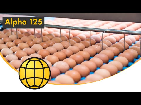 Egg Grading and Packing Machine - Alpha grader 25,200-45,000 eggs/hour