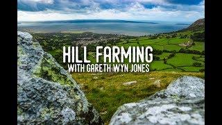 Hill Farming Sheep with Gareth Wyn Jones in Wales