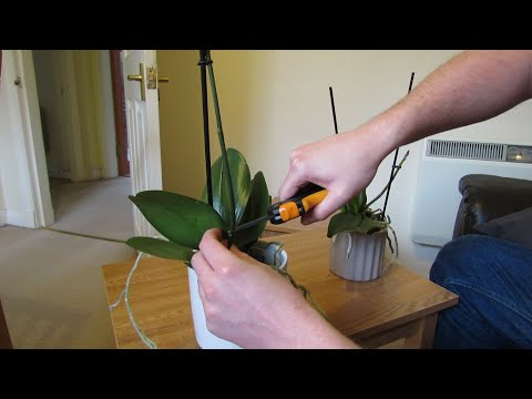 How To Get Your Phalaenopsis Orchids To Flower Again