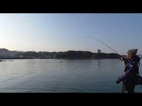 細いラインで慎重にアジにヒットした大物魚を引き寄せています 和歌山釣太郎