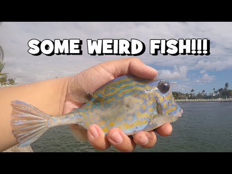 Were Those VENOMOUS/POISONOUS FISH?! (FL Slam EP2) (Pompano Beach, FL)