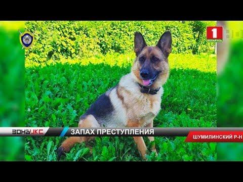Служебная собака по