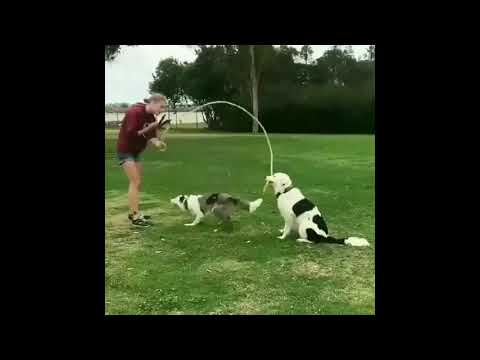 Dogs and puppies hilarious and smartest behavior/reactions - man's best friend! Modern day hero