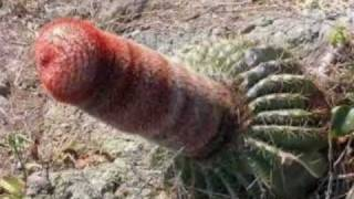 Plants that go bad - hilarious video of nature