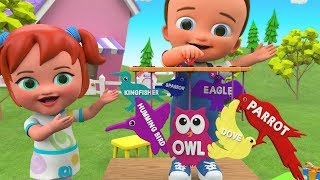 Little Babies Fun Play Learning Birds Names with Wooden Birds Hanging Toy Set 3D Kids Educational