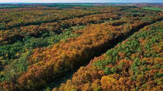 Beautiful Autumn | A Chill Mix