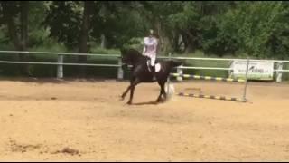 Zawody 04.06.2017 Stajnia Borowianka//Natalia&Watra-CH