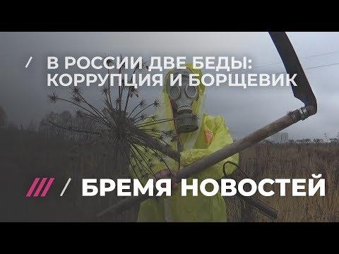 Вопрос: Откуда в Беларуси появился борщевик?