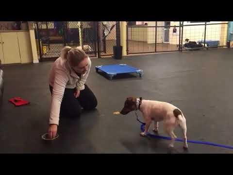 Dog Training Working Dogs On Impulse Control And Basic