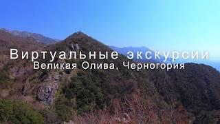 Старая олива Бечичи виртуальная экскурсия в Черногории