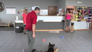 "Mmk Basic Obedience: Week #5 - Continuing The ""program"""