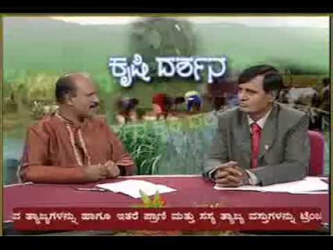 03 07 2013 live phone in on pulses for monsoon dr k p vishwanath and dr b narayanswamy