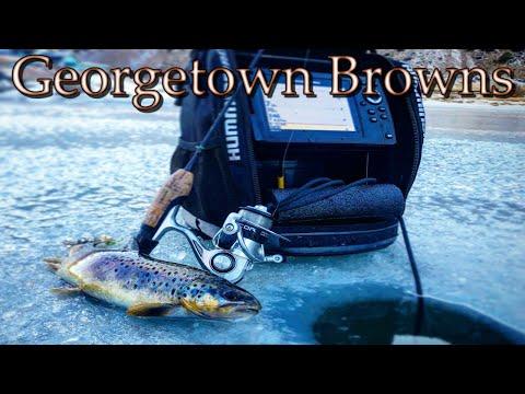 Brown Trout At Georgetown Lake, Colorado