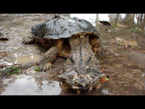 Top 7 Reptiles Más Peligrosos Del Mundo