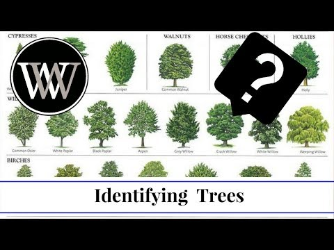 How To Identify A Tree By Leaf, Bark And Fruit | Wood And Lumber Identification For Woodworking