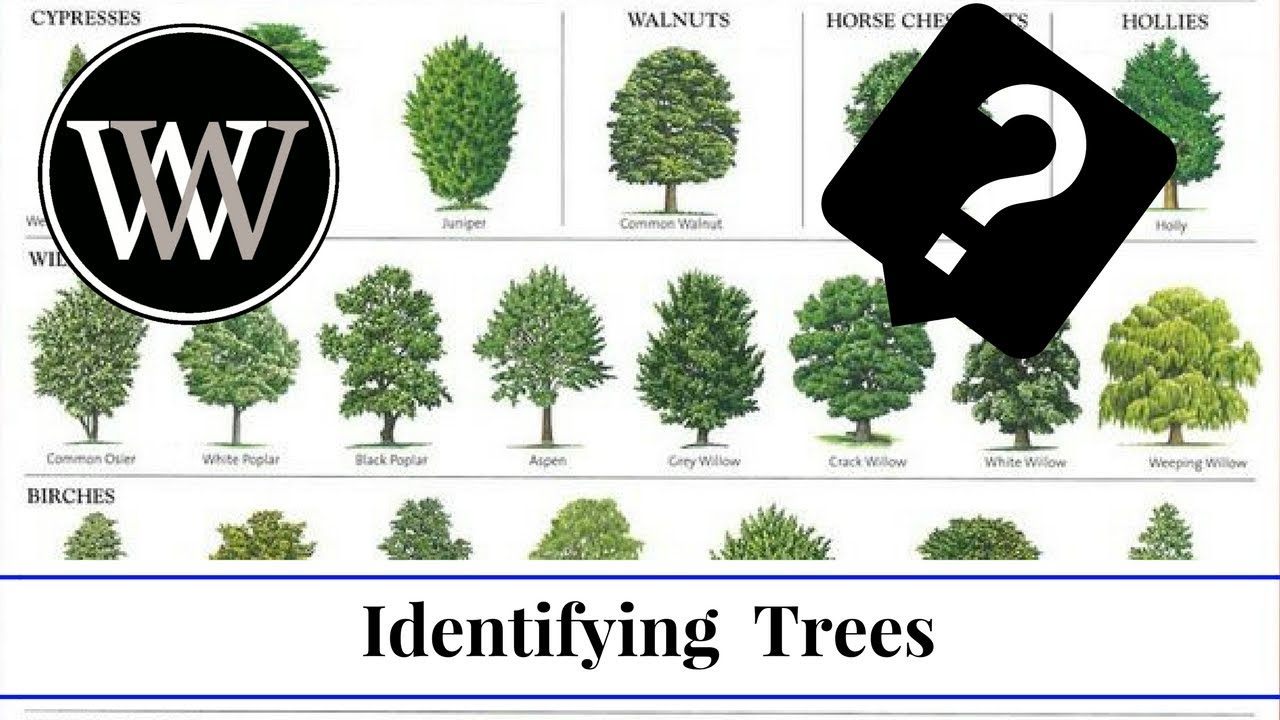 Tree Or Organisation