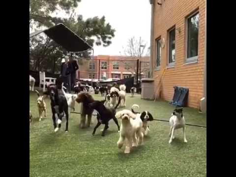Happy Dogs!
