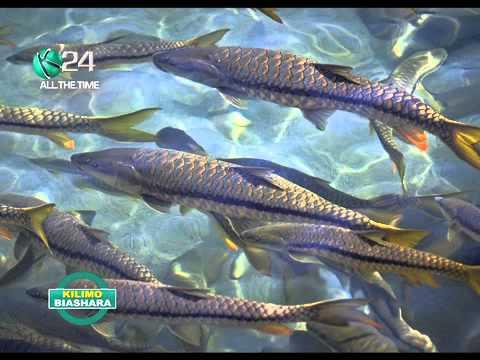 Kilimo Biashara: Aquaculture