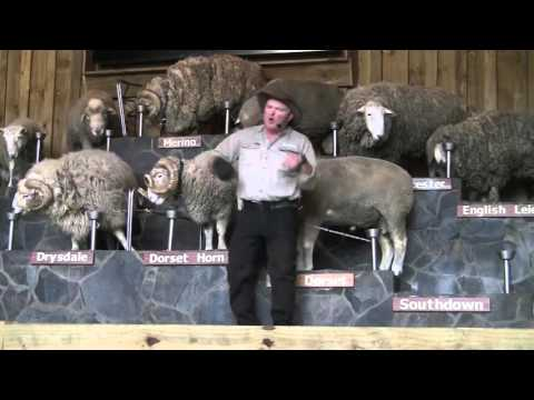Rotorua Sheep Show