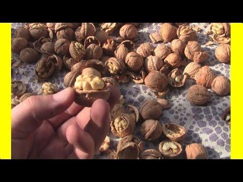 Вопрос: Как очистить от скорлупы грецкие орехи?