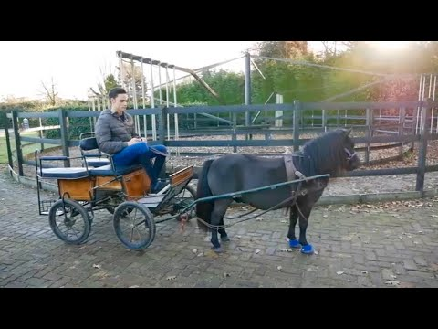 PONY TAKES OFF WITH CARRIAGE