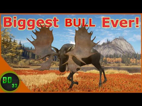 The Biggest Diamond Moose I've Ever Seen! Call Of The Wild