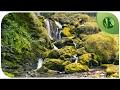 3 HORAS Com Sons Da Natureza Água Pássaros HD Para Relaxar E Meditação 💦 🌼 🍂 🌳