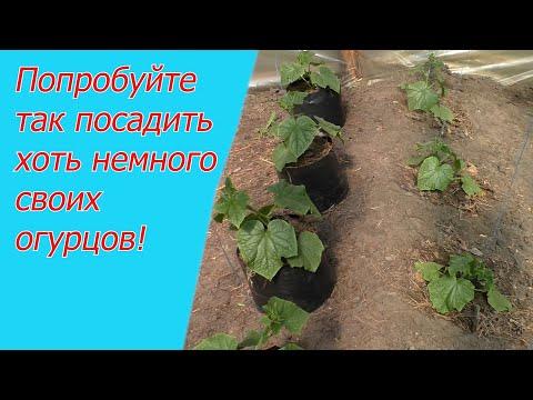 Три способа выращивания