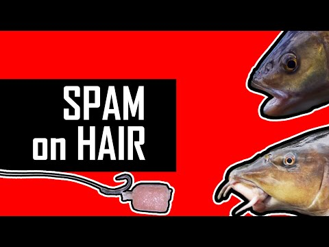 SPAM On The HAIR-RIG For BARBEL And CHUB. The BEST Way.