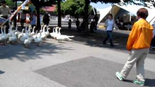 東武動物公園 Tobu Zoo.