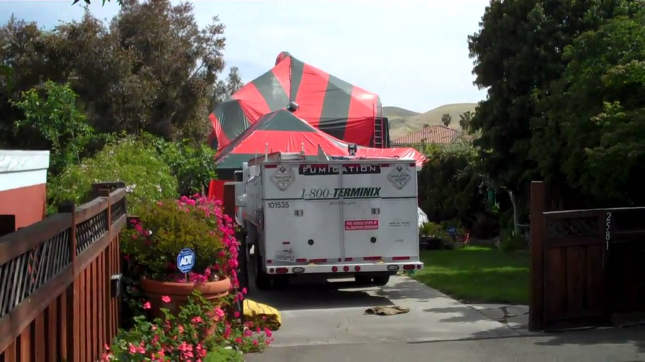& terminix fumigation 5-20-10  the tenting process - YouTube