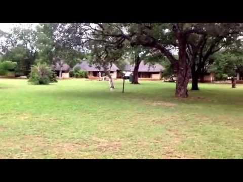 Accommodation in a Kruger Park, Satara Rest Camp.