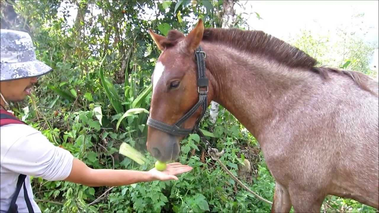 What do horses eat youtube for What can you make out of horseshoes