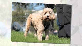 Doggy Flash Mob To Celebrate Apdt Train Your Dog Month