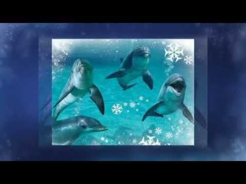 Voyager Deep Sea Fishing Dolphin Cruises December