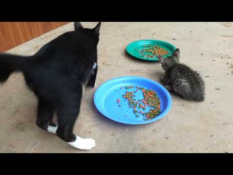 Cat, Cat and Dog Eating, Baby Cats, Cute and Funny Cat Videos Compilation #34, Aww Animals