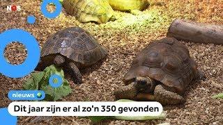 Dierenambulance druk met gedumpte schildpadden