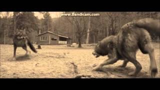 twilight wolves shatter me lindsey stirling ft lzzy hale
