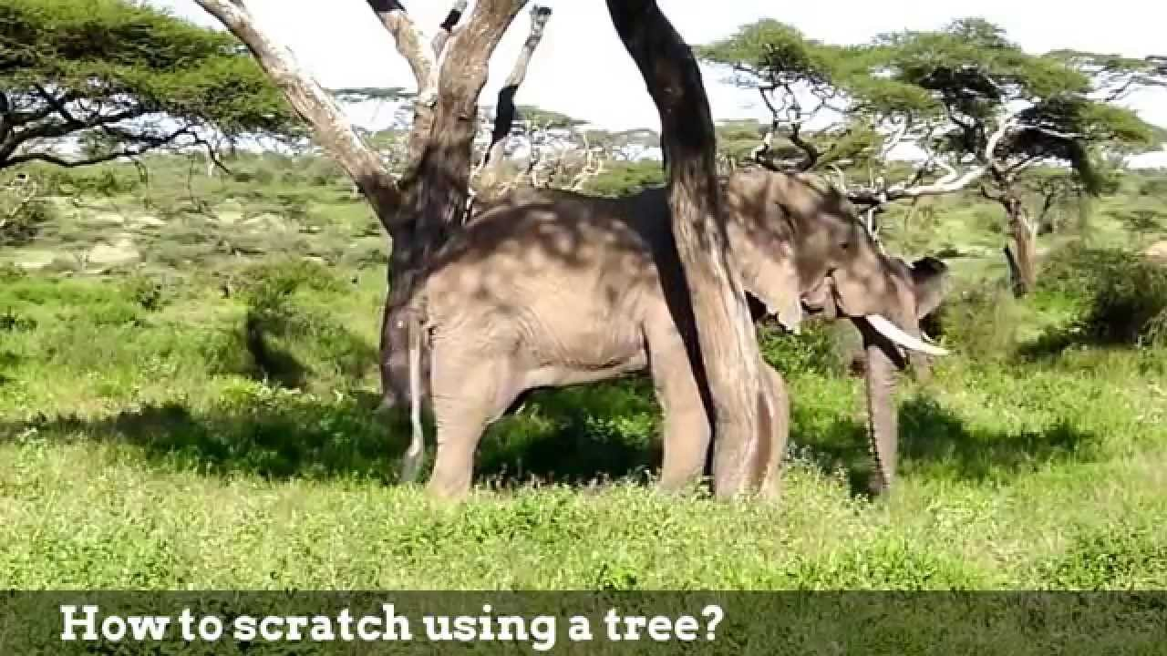 Elephant Way of Life: How do Elephants live day to day - Lean ...