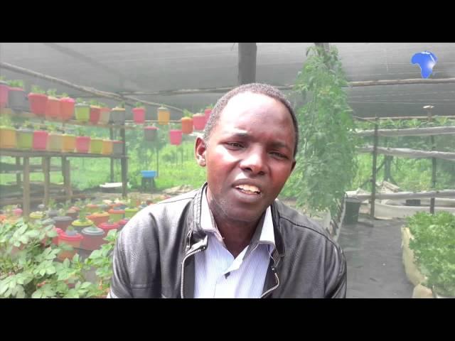 Farmer reaping big from hydroponics