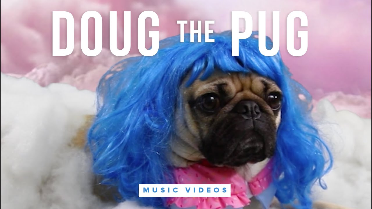 meet darice the pug song